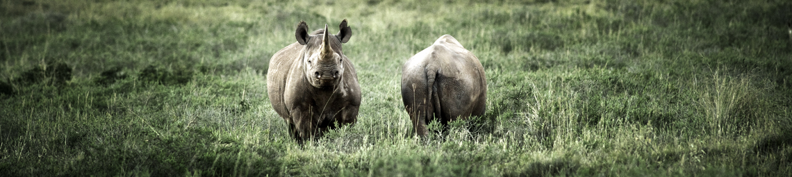 headerimage_rhino